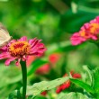 Butterfly on tropical flower — ストック写真