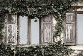 Wood window and creeper — Stock Photo