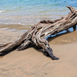 Driftwood on the beach — Stock Photo