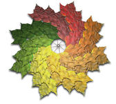 Maple Leaf Autumn Spiralling Spectrum — Stock Photo