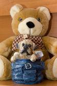 Toy dog — Stock Photo