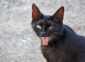 Evil black cat — Stock Photo