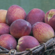 Freshly picked Peaches in Basket - Stock Photo