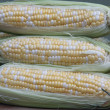 Fresh Corn on the Cob - Stock Photo