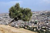 Luftbild von fes medina — Stockfoto