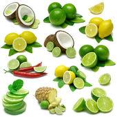 Lemon Lime Sampler — Stock Photo