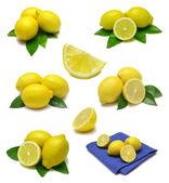 Lemon Sampler — Stock Photo