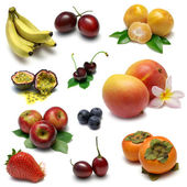 Fruit Sampler — Stockfoto