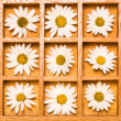 Stock Photo: Shadow box with white daisies