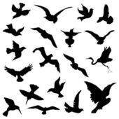 Bird silhouettes — Stock Vector