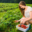 Stock Photo: Berry checking