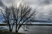 Bare tree on the river bank — Stock Photo