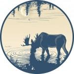 Elk in the drinking water — Stock Vector