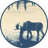 Elk in the drinking water — Stock Vector