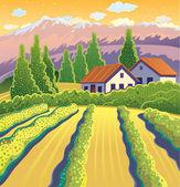 Solar Landscape with vineyard — Stock Vector