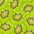 Fresh juicy kiwi fruit slice background — Stock Photo #11374963