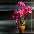 Potted Orchid On Table — Stock Photo