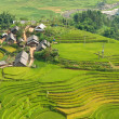 Local Village with Rice Terraces — Stock Photo #10955889