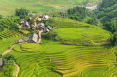 Local Village with Rice Terraces — Stock Photo