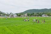 Tourists Walking across Rice Paddy — Stock Photo