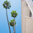 Palm trees and modern architecture — Stock Photo