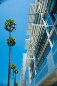 Palm trees and modern architecture — Stok fotoğraf