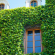 Old house wall with vines - Stock Photo