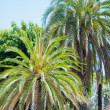 Palm in park of Los angeles — Stock Photo #11413170