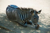 Zebra at Zoo of Los Angeles — Foto de Stock