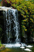 Waterfall and duck in Zoo of Los Angeles — Foto de Stock