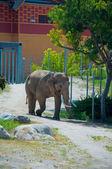 Trinken elefanten in der afrikanischen savanne — Stockfoto