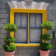 Window and flower arrangement, — Stock Photo