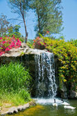 Waterfall and duck in Zoo of Los Angeles — ストック写真