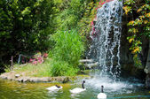 Waterfall and duck in Zoo of Los Angeles — Stock Photo