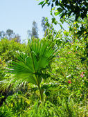 Palm in park of Los angeles — Stockfoto