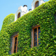Old house wall with vines — Stock Photo #11506313