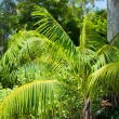 Leaves of palm in park of Los angeles — Stock Photo #11513890