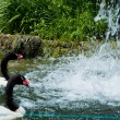 Waterfall and duck in Zoo of Los Angeles — Stock Photo #11513905
