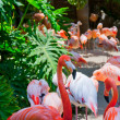 Stock Photo: Some flamingos in water