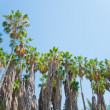 Palm in park of Los angeles — Stock Photo
