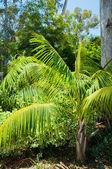 Folhas de palmeira no parque de los angeles — Foto Stock