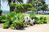 Exotische park in santa monica — Stockfoto
