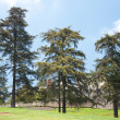 Trees and lawn — Stock Photo #11647836