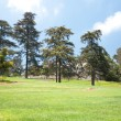 Trees and lawn — Stock Photo #11647845