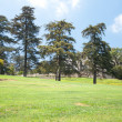 Trees and lawn — Stock Photo #11647852