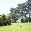 Trees and lawn — Stock Photo #11647871