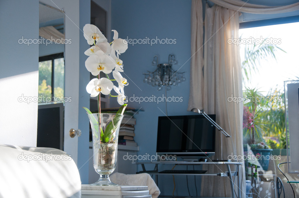 Closeup of orchid flower at the flat — Stock Photo #11902609