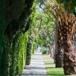 Stock Photo: Alley Plantation,