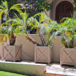 Plants palm trees — Stockfoto