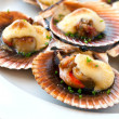 Queen scallop close up. — Stock Photo